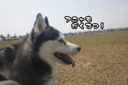 6_20110424204718.jpg