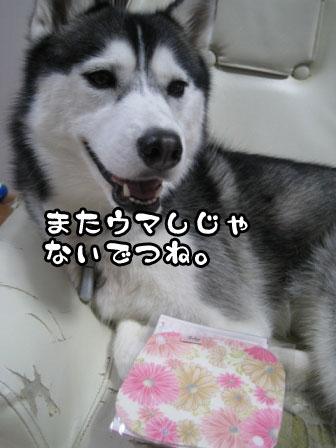 6_20110508222430.jpg