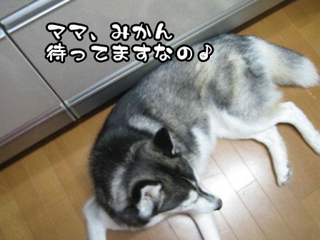6_20110603215252.jpg