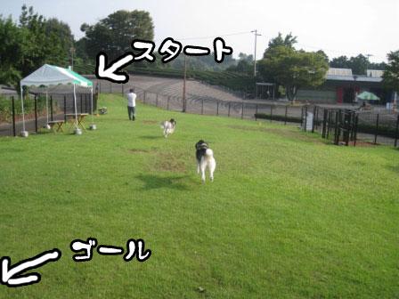6_20110801193320.jpg