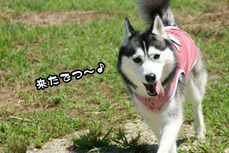 6_20110809200952.jpg