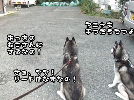 6_20110919201530.jpg