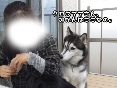 6_20111103215521.jpg