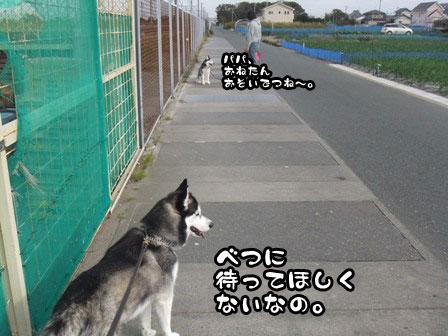 6_20111127203859.jpg