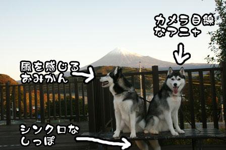 6_20111210192340.jpg