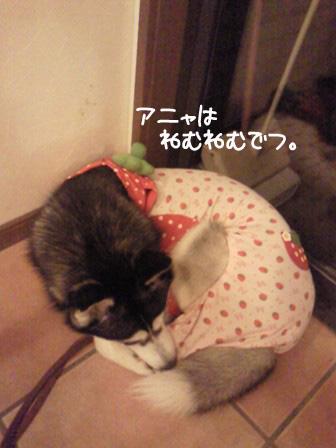 72_20101006195929.jpg
