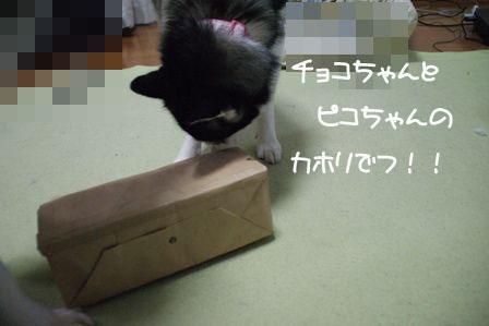 7_20100325213212.jpg