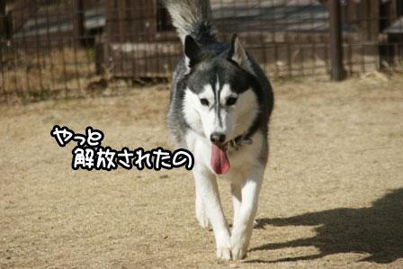 7_20110125185232.jpg