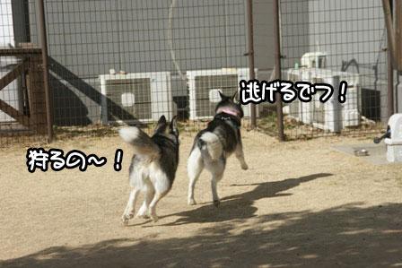 7_20110201193203.jpg