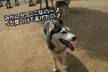 7_20110203205047.jpg