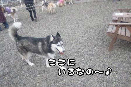 7_20110327200534.jpg