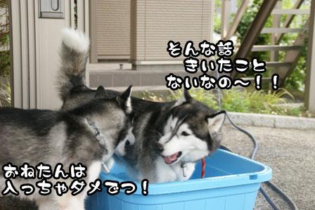 7_20110704210811.jpg