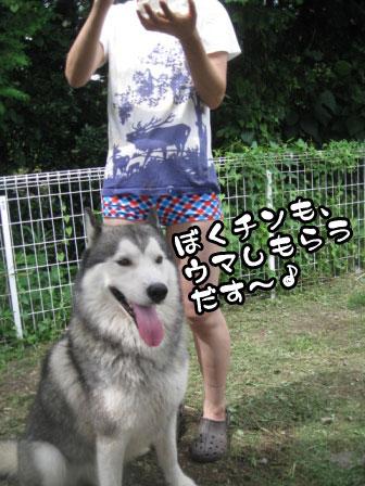 7_20110829214642.jpg