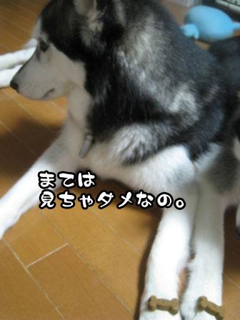 7_20110901203424.jpg