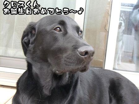 7_20111103215525.jpg