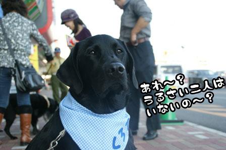 7_20111118213739.jpg