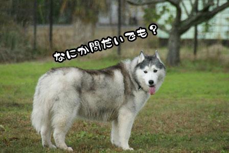 7_20111122213409.jpg