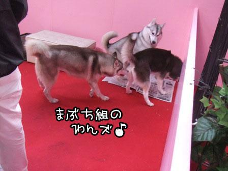 7_20120123203231.jpg