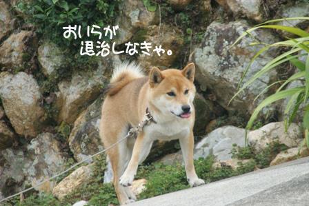 8_20100802205429.jpg