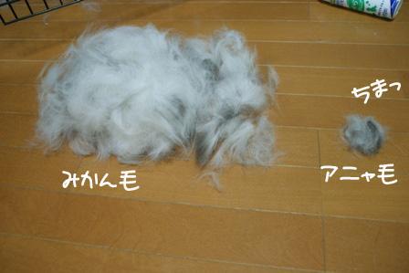 8_20101027213759.jpg