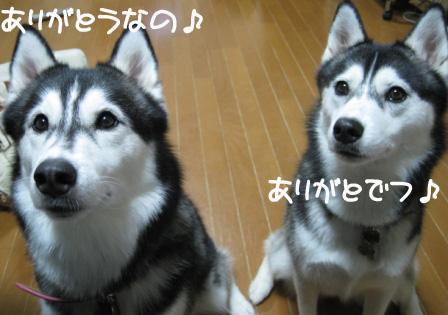 8_20101030235146.jpg