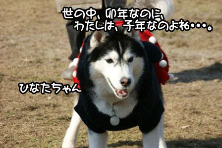 8_20110110205759.jpg