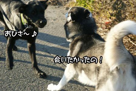 8_20110123161142.jpg
