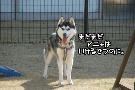 8_20110125185237.jpg