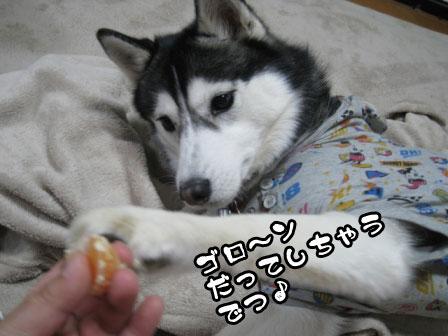 8_20110218203137.jpg