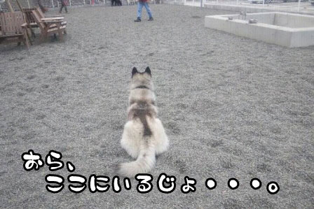 8_20110327200544.jpg