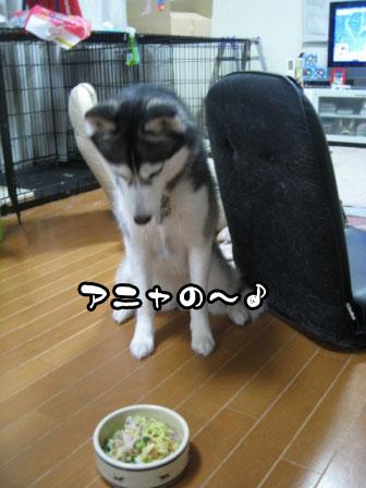 8_20110531214208.jpg