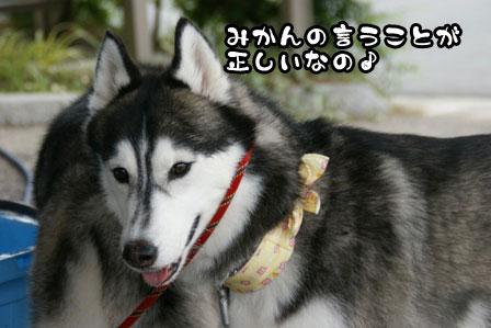 8_20110704210816.jpg