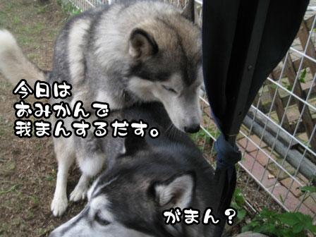 8_20110829214647.jpg
