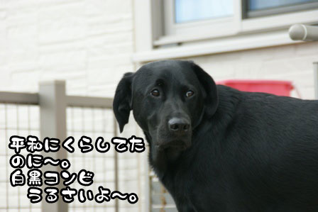 8_20110930203006.jpg