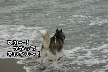 8_20111030220141.jpg