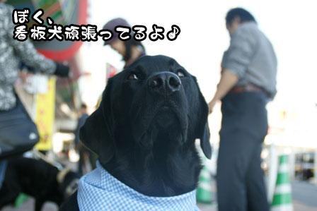 8_20111118213743.jpg