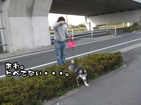 8_20111127203909.jpg
