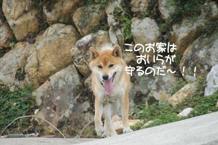 9_20100802205436.jpg