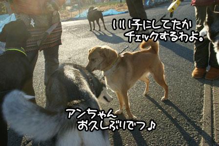 9_20110123161148.jpg