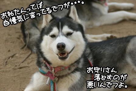 9_20110203205058.jpg