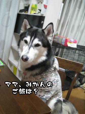 9_20110218203142.jpg