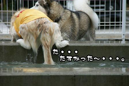 9_20110629205401.jpg