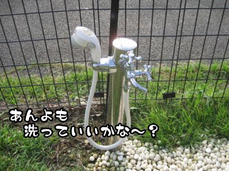 9_20110801193333.jpg