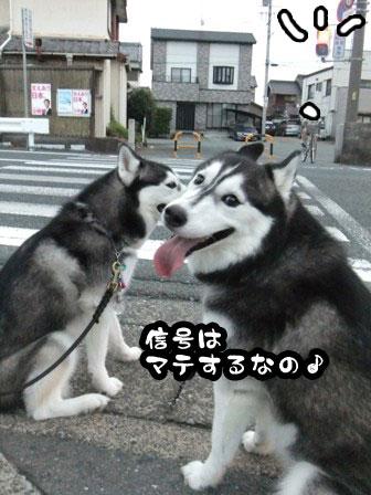 9_20110920210949.jpg