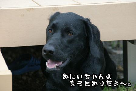 9_20110930203011.jpg