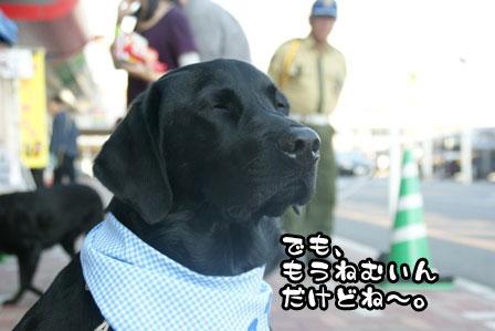 9_20111118213747.jpg