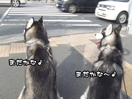 9_20111127203913.jpg