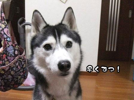 9_20120109214310.jpg