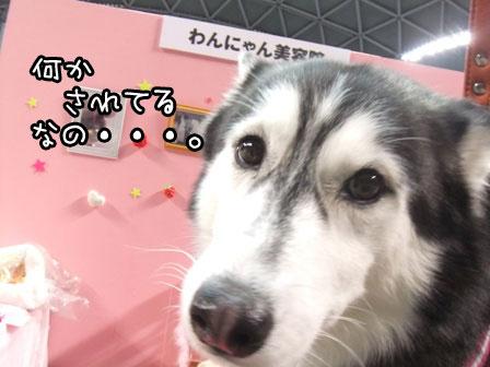 9_20120123203240.jpg