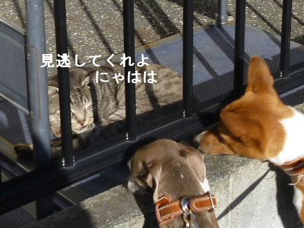 2011_1220ナッキー0011